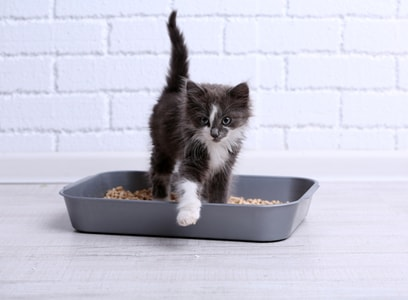 Comment atténuer les odeurs d'urine de la litière de votre chat ?